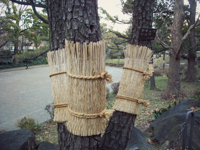 """There were are growing Pinus densiflora, aka Japanese red pine trees or """"akamatsu,"""" in this area. This one, I believe, was multi-trunked and thus labeled """"タギョウショウ."""""""