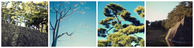 Trees around the Imperial Palace Gardens.