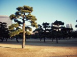 Nature in Japan: Plants, Trees, and All ThingsGreen