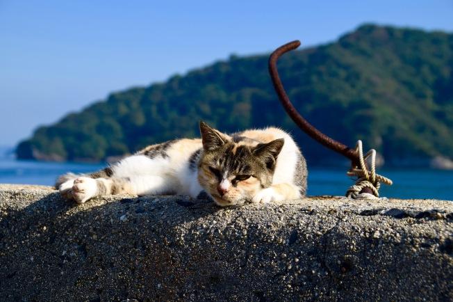 f161301_tokyo_cat_tamlynkurata