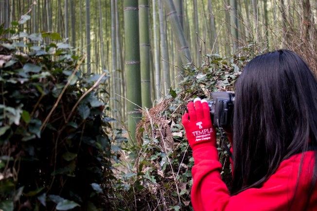 SP18003_Kyoto_SA Student in Arashiyama Bamboo Grove_KaylaAmador