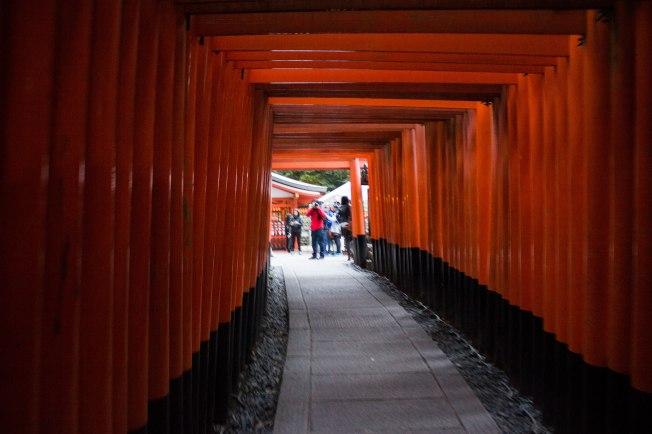 SP18009_Kyoto_Torii Gates at Fushimi Inari_KaylaAmador