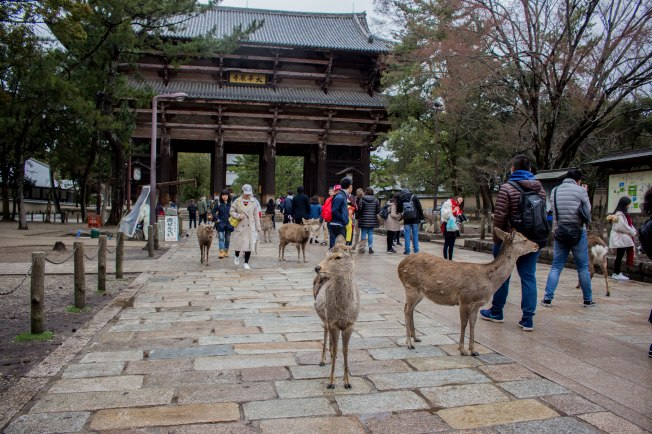 SP18109_Nara_Nandaimon -Entrance to Todai-ji Temple_KaylaAmador