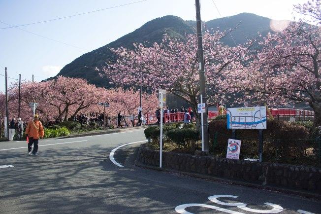 SP18809_Izu_Street in Kawazu_KaylaAmador